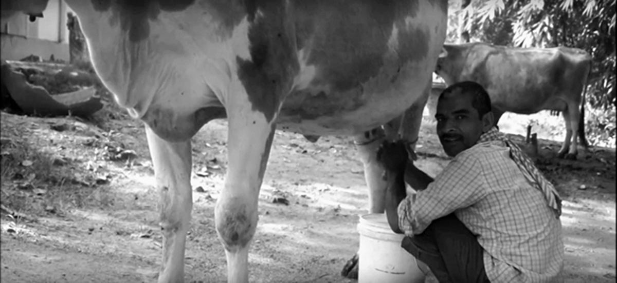 Profitable dairying for smallholder farmers
